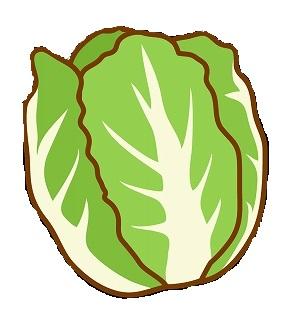 vegetable_hakusai_illust_1884